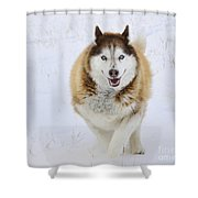 Happy Husky Shower Curtain