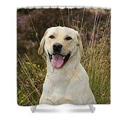 Happy Labrador Shower Curtain