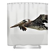 Happy Pelican Shower Curtain