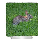 Happy Rabbit Shower Curtain