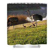 Happy Sandhill Crane Family - Original Shower Curtain