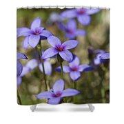 Happy Tiny Bluet Wildflowers Shower Curtain