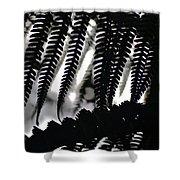 Hapu'u Fern Silhouette Shower Curtain
