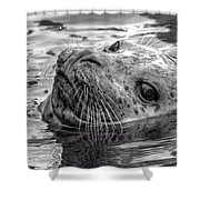 Harbor Grey Shower Curtain