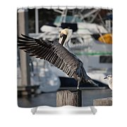Harbor Pelican And Gull Shower Curtain