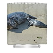 Harbor Seal Suckling Young Shower Curtain