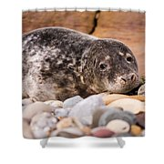Harbour Seal Close Up Shower Curtain
