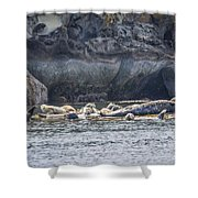 Harbour Seals Resting Shower Curtain
