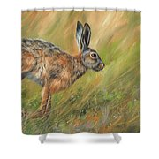 Hare Shower Curtain