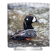 Harlequin Duck In Rapids Shower Curtain