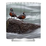 Harlequin Ducks At Lehardy Rapids Shower Curtain