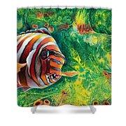 Harlequin Tuskfish Shower Curtain