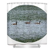Harmonious Canada Geese Shower Curtain by Will Borden