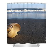 Harp Shell On Beach Shower Curtain