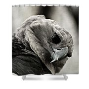 Harpy Eagle Closeup Shower Curtain
