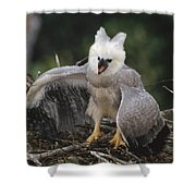 Harpy Eagle Threat Posture Amazonian Shower Curtain