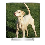 Harrier Dog Shower Curtain