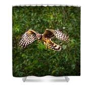 Harrier Hunt Shower Curtain