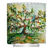 Harry Lauders Walking Stick  Shower Curtain