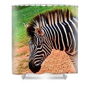 Hartman Zebra Shower Curtain