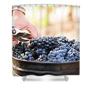 Harvest At Vineyard In Santa Cruz Shower Curtain