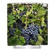 Harvest Divine Shower Curtain