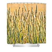 Harvest Time Shower Curtain