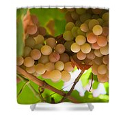 Harvest Time. Sunny Grapes II Shower Curtain