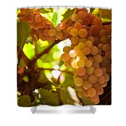 Harvest Time. Sunny Grapes IIi Shower Curtain by Jenny Rainbow