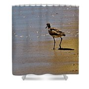 Hatteras Island Bird 8/24 Shower Curtain