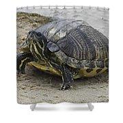 Hatteras Turtle 2 Shower Curtain