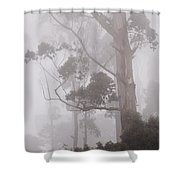 Haunted Forest. Nuwara Eliya. Sri Lanka Shower Curtain by Jenny Rainbow