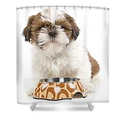 Havanese With Dog Bowl Shower Curtain