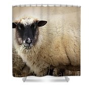 Have You Any Wool? Shower Curtain