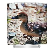 Lost Baby Duckling Shower Curtain