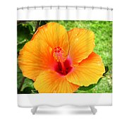 Hawaii Orange Hibiscus Shower Curtain