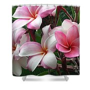 Hawaii Plumeria Shower Curtain