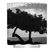 Hawaii Tree And Sail Boat Shower Curtain