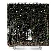Hawaiian Banyan Tree - Hilo City Shower Curtain