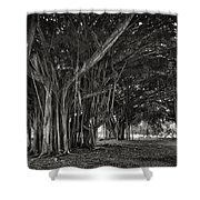Hawaiian Banyan Tree Root Study Shower Curtain by Daniel Hagerman