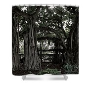 Hawaiian Banyan Trees Shower Curtain