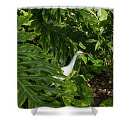 Hawaiian Garden Visitor - A Bright White Egret In The Lush Greenery Shower Curtain