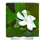 Hawaiian Gardenia Shower Curtain