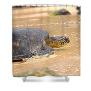 Hawaiian Green Sea Turtle 2 Shower Curtain