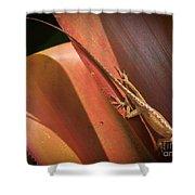 Hawaiian Lizard Shower Curtain