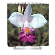 Hawaiian Orchid Shower Curtain