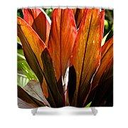 Hawaiian Ti Plant Shower Curtain