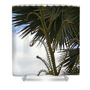 Hawaiiana 18 Shower Curtain