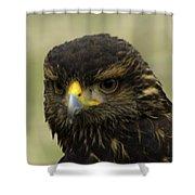 Hawk 1 Shower Curtain