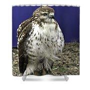 Hawk 3 Shower Curtain